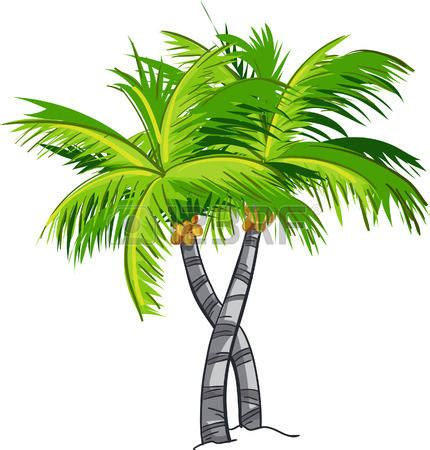 Essay on a coconut tree service